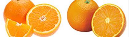 Apelsin-11